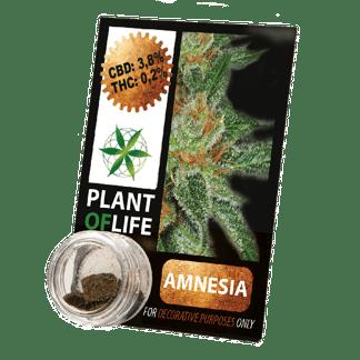 chanvre compressé, compress, amnesia, cbd, 3.8% cbd, plant of life