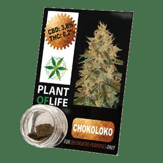 extrait naturel de chanvre compressé, compress, chocoloko, cbd, 3.8% cbd, plant of life