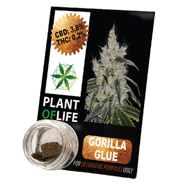 gorilla glue, chanvre compressé, 3.8% de CBD, CBD, plant of life